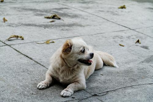 dog poop removal service